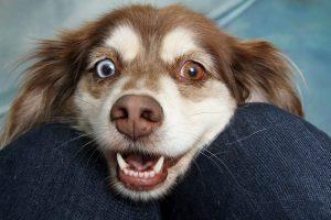 יום עבודה עם הכלב - יתרונות לעובדים וגם למעסיקים